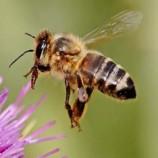 پاورپوینت معماری زنبور عسل